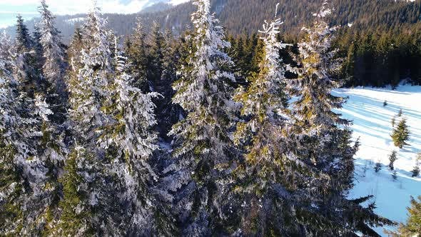 Thumbnail for Winter Snow Trees. Aerial View Fly Over. Nature