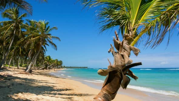 Thumbnail for Woman lying on palm tree