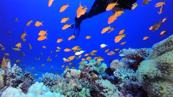Underwater Tropical Water Blue Sea and A Diver