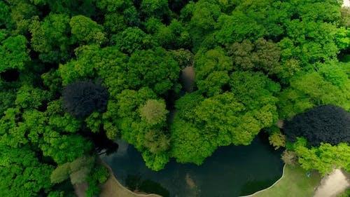 Fluss Umgeben von Bäumen