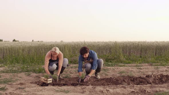 Thumbnail for Two Farmers Planting Seedlings Together