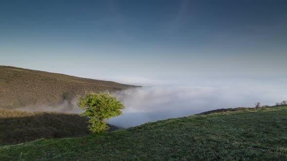 Thumbnail for Tree on the Hill and Fog
