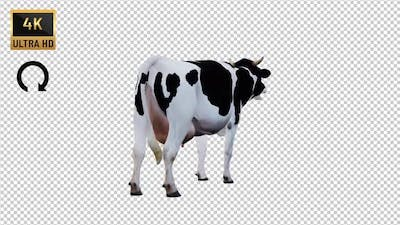 Cow İdle Back View