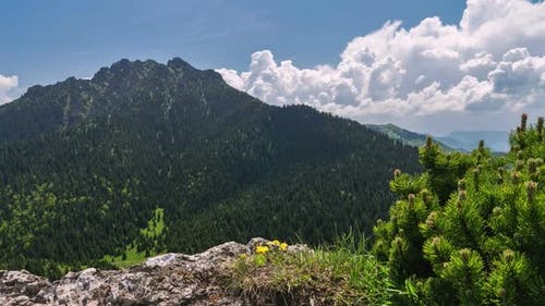 Green Alps Mountains in Sunny Summer Adventure
