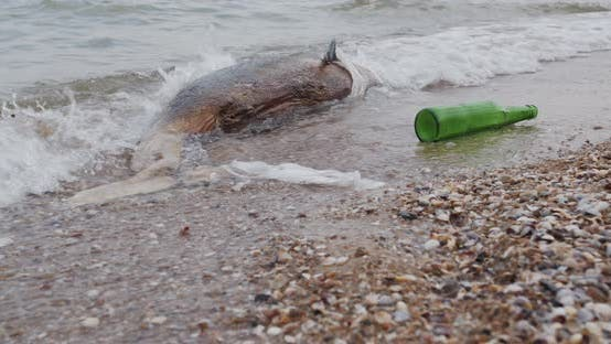 Thumbnail for Dead Young Dolphin on the Sea Shore. Earth Wildlife, Environmental Pollution, Ecological Catastrophe