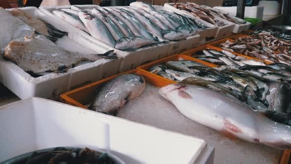 Fresh Sea Fish in Ice on the Counter of Seafood Market. Fish Sold on the Street.