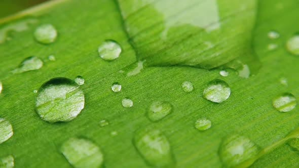 Thumbnail for Water Droplets on the Leaf of the Plant