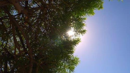 Sun Glaring Through the Huge Trees