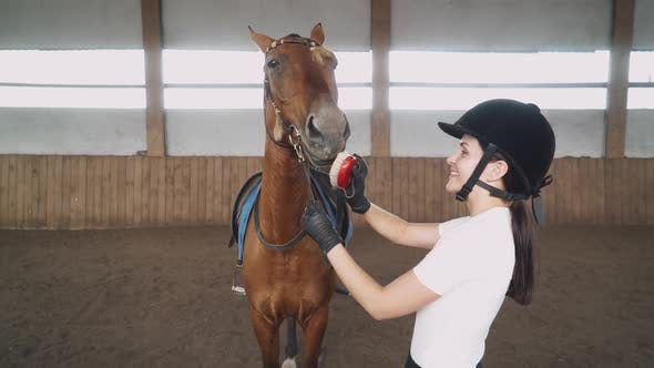 Young Female Rider Combs the Horse with a Brush, Takes Care of the Horse, Strokes the Wool and