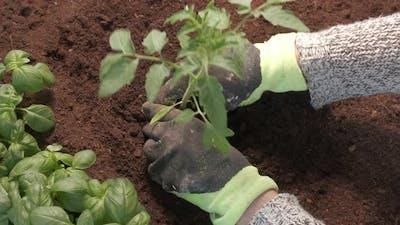 Farmer Planting Seedling Plant Tree Vegetable