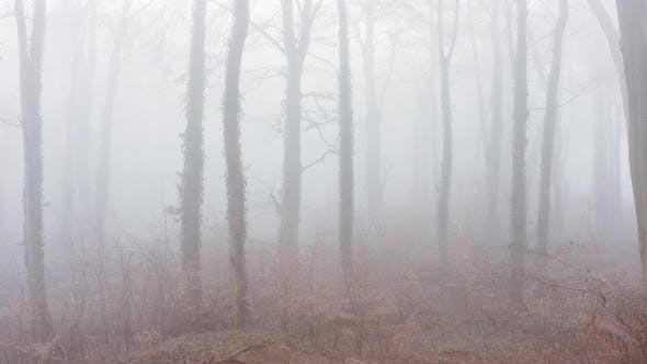 Aerial drone video of haunted mysterious woods with spooky trees in thick mist and fog, woodlands