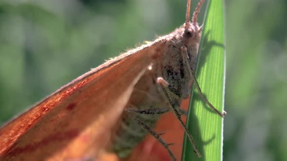 Thumbnail for Close Up Macro of Moth on Leaf