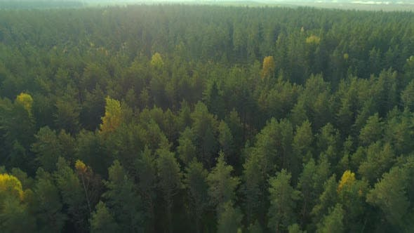 Thumbnail for Forest Aerial Shot in the Morning Sunrise Fly Over
