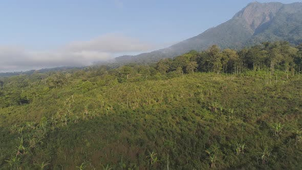 Thumbnail for Tropical Landscape Rainforest and Mountains
