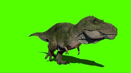 Giganotosaurus Walking