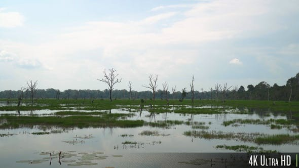 Thumbnail for 4K Bare Dead Trees and Water Plants in an Empty Swamp Marsh