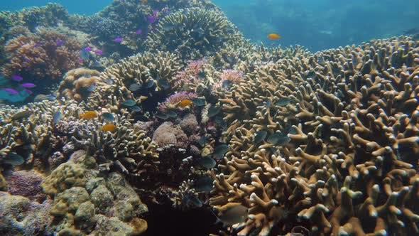 The Underwater World of a Coral Reef