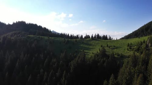 Flying Over The Hills With Trees