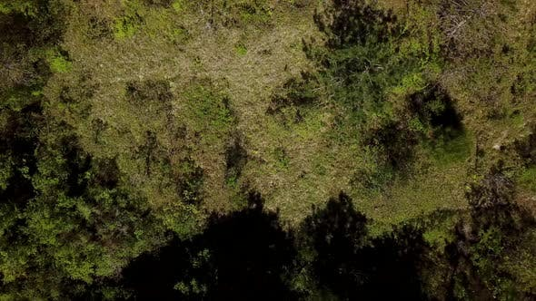 Cover Image for Top Down View Flying Forward Above Beautiful Green Forest