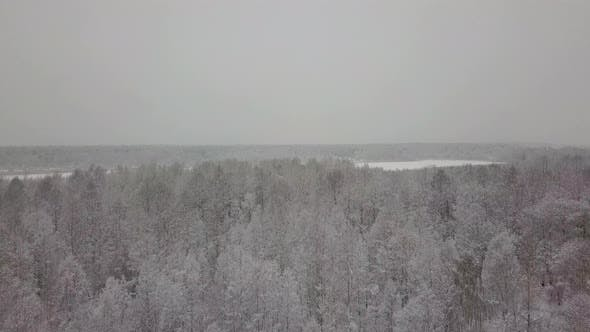 Thumbnail for Aerial View of Snowy Forest