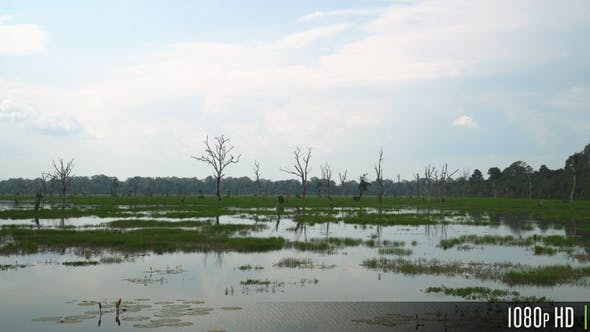 Thumbnail for Bare Dead Trees and Water Plants in an Empty Swamp Marsh