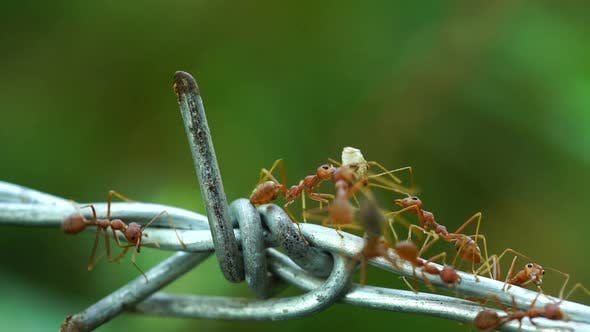ants carrying food on the wire