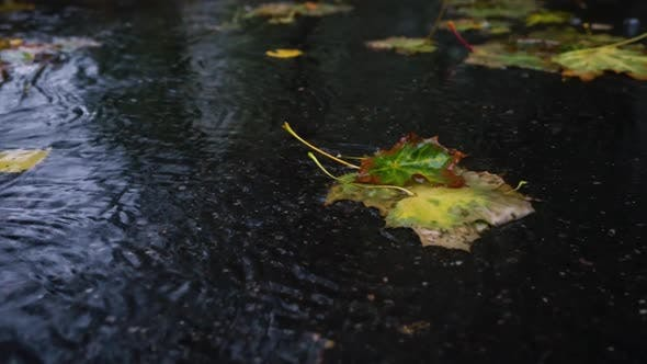 Thumbnail for Autumn Rain In Bad Weather, Rain Drops On The Surface Of The Puddle With Fallen Leaves