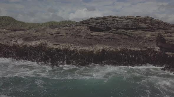Seaweed on the coast