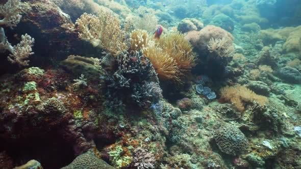 Thumbnail for Coral Reef and Fishes Underwater.