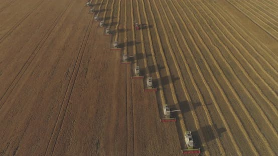 Thumbnail for High angle view of combines harvesting