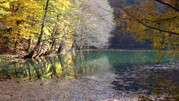 Little Lake in the Peaceful Forest