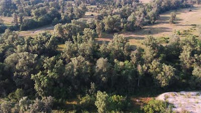Aerial View of the Forest in Europe with Rural Road