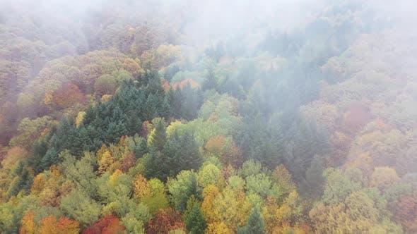 Autumn Wild Forest