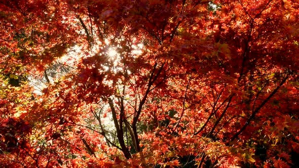 Cover Image for Autumn Forest Leaves