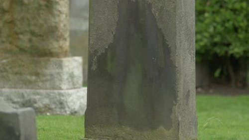 Bird standing on a tombstone
