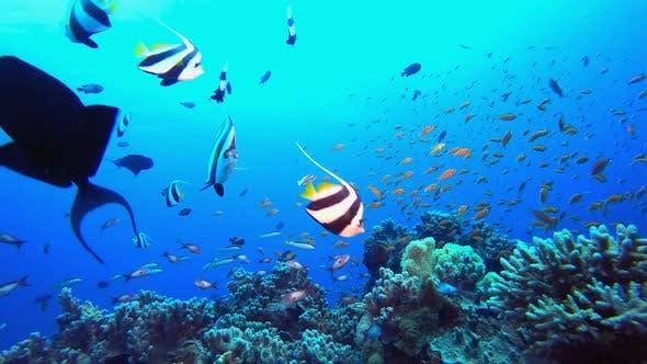 Unterwasserfarbener Hintergrund