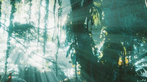 Deep Tropical Jungle Rainforest in Fog