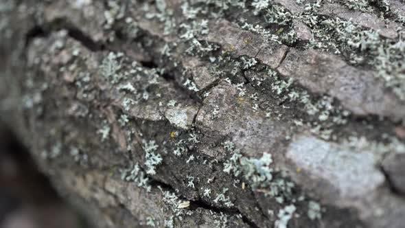 Moos auf dem Baum 5
