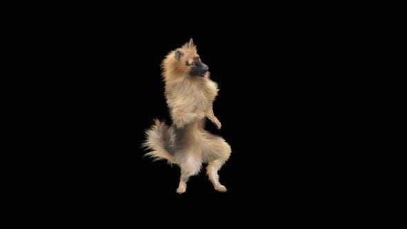 Thumbnail for Dog Dance HD