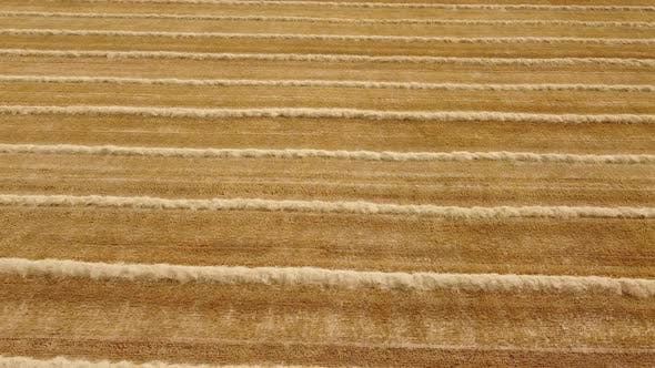 Harvested Golden Wheat Field Agriculture Aerial