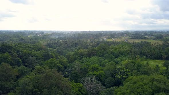 Thumbnail for Natural Park on Bali Indonesia Island Aerial Dolly in