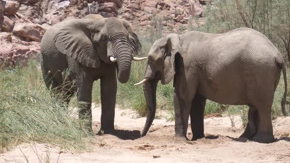 Thumbnail for Two elephants drinking from a small waterhole