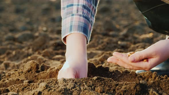 Thumbnail for Planting Seeds in the Ground, Only Hands Are Visible in the Frame