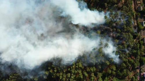 Aerial View of Wildfire in Forest. Burning Forest and Huge Clouds of Smoke.