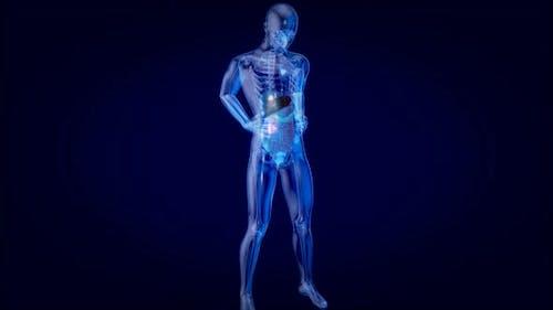 3D concept design of a digestive system