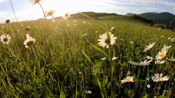 Thumbnail for Green Sunny Meadow in Fresh Spring