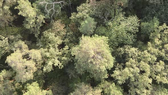 Thumbnail for Aerial View of a Green Forest on a Summer Day