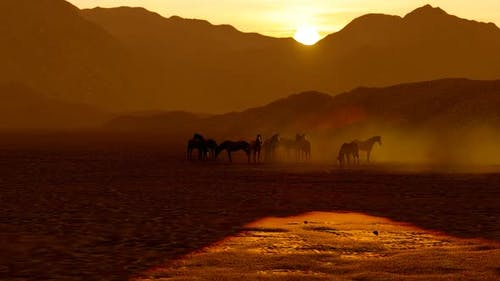 Wild Horses Grazing in Foggy Mountain Range At Sunset