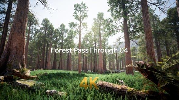 Forest Pass Through 4K 04