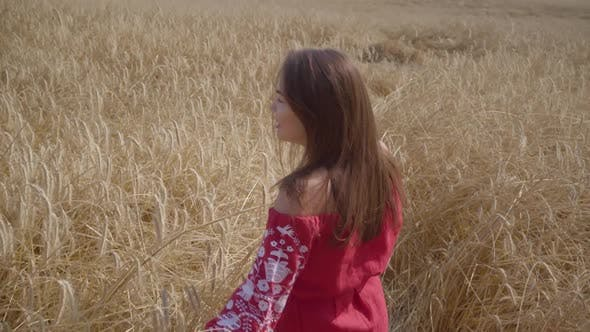 Cover Image for Beautiful Carefree Woman with Long Hair Running Through the Wheat Field Touching Yellow Ears